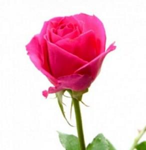 Arti Bunga Berdasarkan Warna Tws Florist