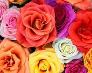Warna-warna bunga mawar
