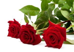 Jenis-Bunga-Mawar-Merah