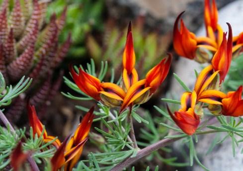 7 Jenis Bunga Terlangka Di Dunia Toko Bunga Jakarta Toko Bunga