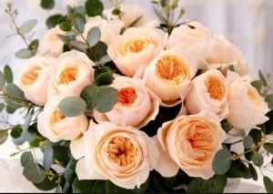 Bunga Mawar Juliet