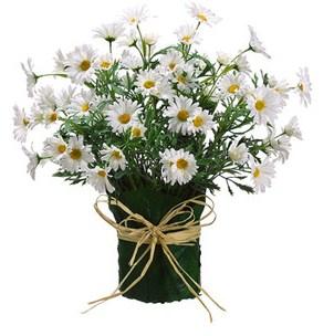 buket-bunga-daisy | Toko Bunga Online | TWS Florist