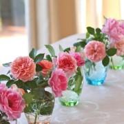 bunga meja anyelir