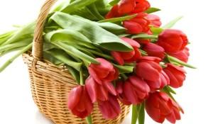 Bunga Tulip Potong