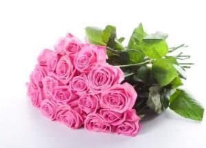 mawar-merah-muda