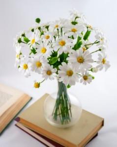 rangkaian-bunga-daisy
