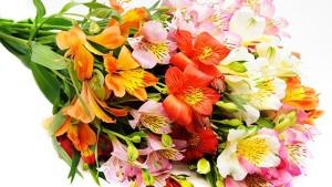 Bunga Alstroemeria