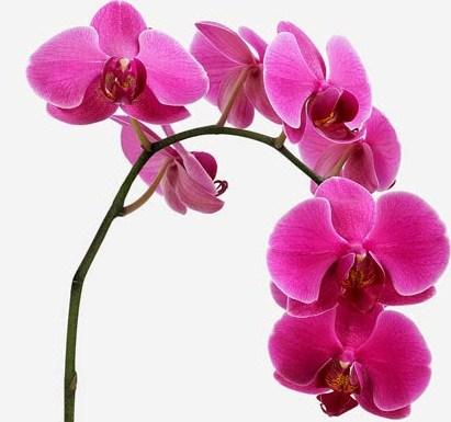 Unduh 7700 Koleksi Gambar Bunga Anggrek Terindah Di Dunia HD Terbaik