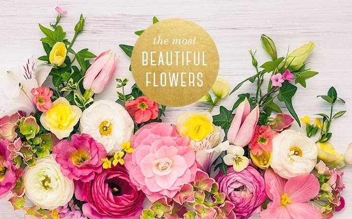 12 Jenis Bunga Tercantik Beserta maknanya  b7480e7906
