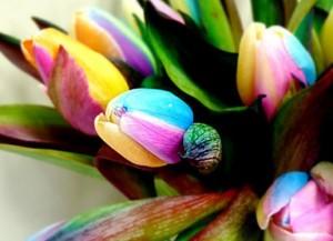 Bunga Tulips Warna Warni