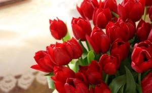 bunga tulips Merah