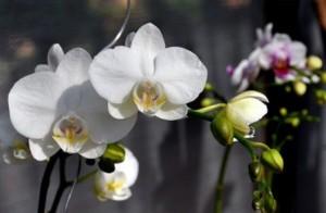 Unduh 410 Gambar Bunga Anggrek Beserta Ciri Cirinya HD Paling Keren