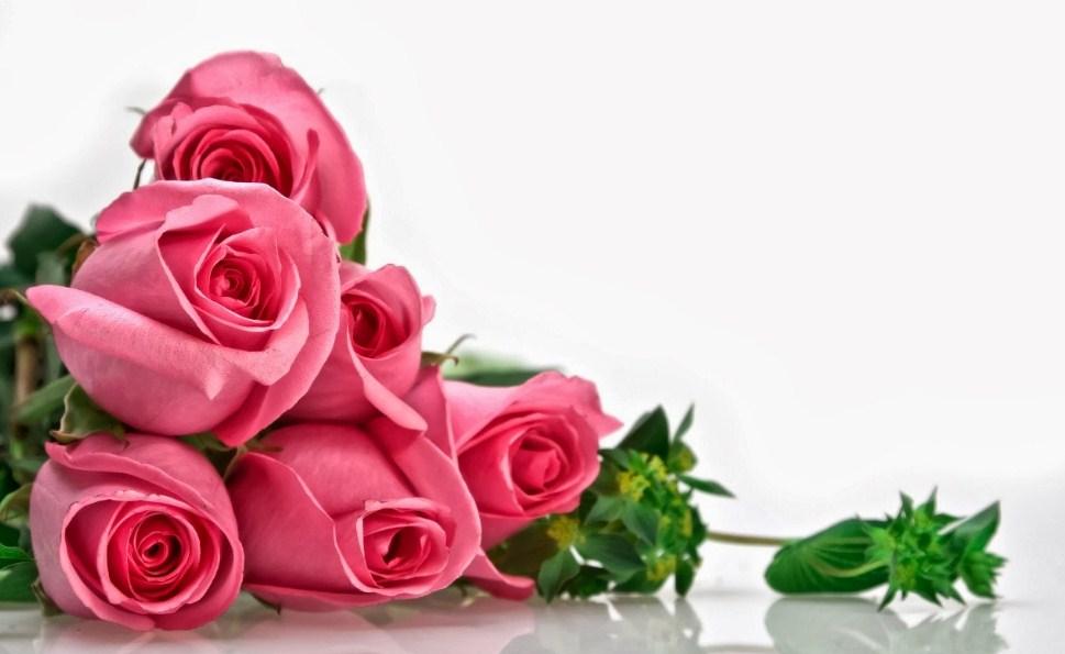 10 Trik Cara Merawat Tanaman Bunga Mawar Agar Sering Berbunga Tws Florist