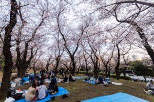 Sakura di Asukayama