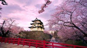 Sakura di Pulau Honsu