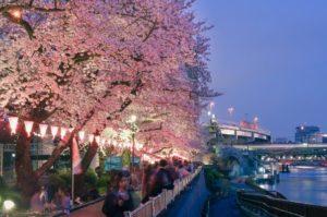Sakura di Sungai Sumida