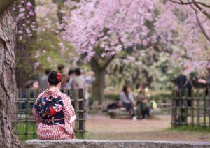 Sakura di Taman Siba
