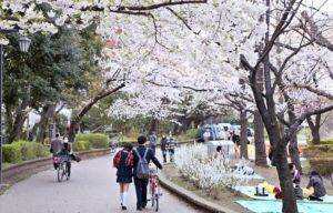 Sakura di Taman Ueno