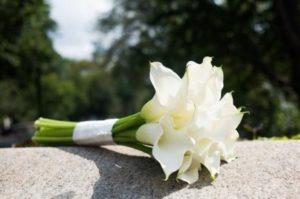 Bunga calla lili