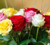 Ragam Warna Bunga Mawar