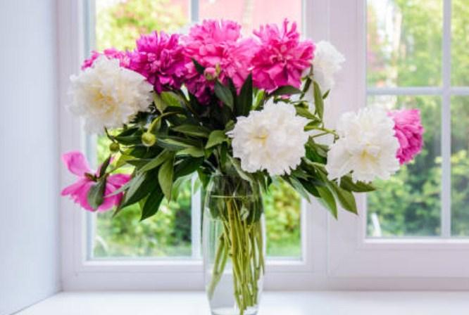 Jenis Jenis Bunga yang Bisa Meningkatkan Rasa Bahagia di Rumah