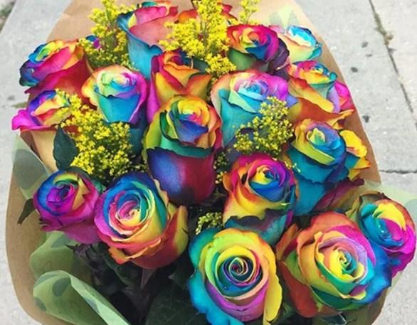 Apakah Bunga Mawar Pelangi Dan Apa Artinya Toko Bunga Makassar Pondok Florist