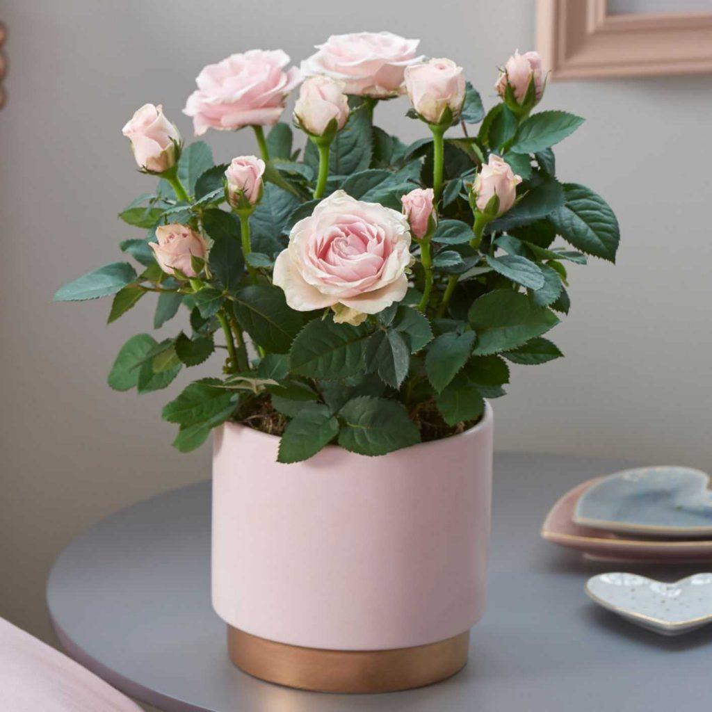 Gunakan Tanaman Hias Mini Dalam Ruangan Kamu Untuk Mempercantik Tws Florist Bunga hiasan meja tamu